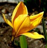 Όμορφο κίτρινο λουλούδι που ψάχνει το μπλε ουρανό στοκ εικόνες με δικαίωμα ελεύθερης χρήσης