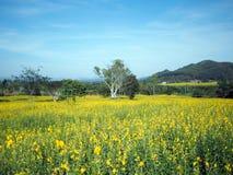 Όμορφο κίτρινο λουλούδι στον τομέα στοκ εικόνα