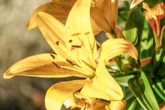 Όμορφο κίτρινο λουλούδι Νέων Μεξικό Στοκ φωτογραφία με δικαίωμα ελεύθερης χρήσης