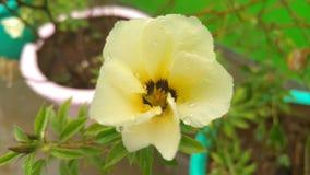 Όμορφο κίτρινο λουλούδι χρώματος Στοκ Φωτογραφία