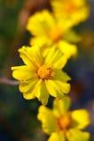 Όμορφο κίτρινο σύνθετο υπόβαθρο λουλουδιών Στοκ εικόνα με δικαίωμα ελεύθερης χρήσης