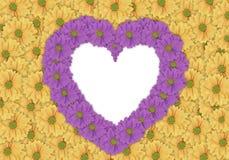 Όμορφο κίτρινο υπόβαθρο λουλουδιών μαργαριτών και πορφυρό λουλούδι μαργαριτών Στοκ Φωτογραφίες