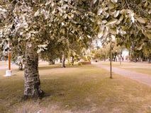 Όμορφο και ήρεμο πάρκο σε μια μικρή πόλη Στοκ φωτογραφία με δικαίωμα ελεύθερης χρήσης