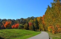Όμορφο και ζωηρόχρωμο φθινόπωρο Η ηλιόλουστη αλέα σε ένα πάρκο Στοκ Φωτογραφίες