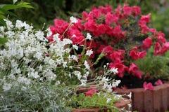 όμορφο καλοκαίρι κήπων Στοκ φωτογραφία με δικαίωμα ελεύθερης χρήσης