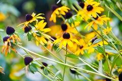 όμορφο καλοκαίρι λουλ&omi Στοκ εικόνες με δικαίωμα ελεύθερης χρήσης
