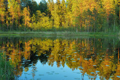 όμορφο καλοκαίρι σκηνής Στοκ φωτογραφία με δικαίωμα ελεύθερης χρήσης
