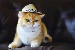 Όμορφο καπέλο γατών Στοκ φωτογραφίες με δικαίωμα ελεύθερης χρήσης