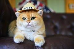 Όμορφο καπέλο γατών Στοκ Εικόνες