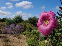 όμορφο καλοκαίρι λουλ&omi Στοκ φωτογραφία με δικαίωμα ελεύθερης χρήσης