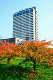 Όμορφο κεράσι sakura στο χρόνο φθινοπώρου να αναφερθεί Chiune Sugihara Στοκ Φωτογραφία