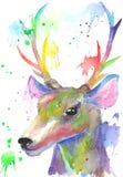 Όμορφο κεφάλι ελαφιών η διακοσμητική εικόνα απεικόνισης πετάγματος ραμφών το κομμάτι εγγράφου της καταπίνει το watercolor Στοκ Εικόνες