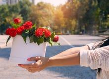 Όμορφο κορίτσι με τα λουλούδια Στοκ Εικόνες
