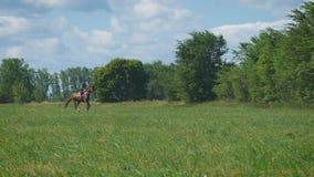 Όμορφο κορίτσι που οδηγά ένα άλογο στην επαρχία καλπασμός Η άποψη από το μακρινό σημείο απόθεμα βίντεο