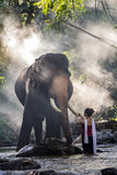 Όμορφο κορίτσι στα παραδοσιακά ταϊλανδικά κοστούμια σχετικά με το ελεφαντόδοντο ελεφάντων ` s στοκ εικόνες