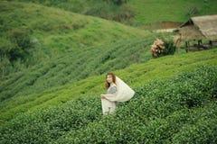 Όμορφο κορίτσι στους τομείς της φυτείας τσαγιού στο υποστήριγμα doi angkhang Στοκ εικόνα με δικαίωμα ελεύθερης χρήσης