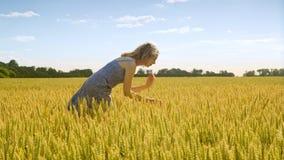 Όμορφο κορίτσι στο χρυσό τομέα συγκομιδών σίτου Γεωπόνος που φαίνεται αυτιά σίτου φιλμ μικρού μήκους