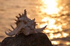 Όμορφο κοχύλι στην πέτρα Στοκ εικόνες με δικαίωμα ελεύθερης χρήσης