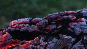 Όμορφο κούτσουρο που σιγοκαίει στην πυρκαγιά απόθεμα βίντεο