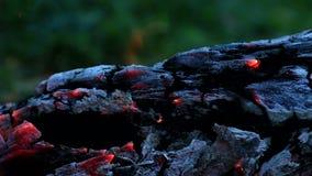 Όμορφο κούτσουρο που σιγοκαίει στην πυρκαγιά φιλμ μικρού μήκους