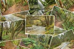 Όμορφο κολάζ σωρών των εικόνων τροπικών δασών 2 αριθμοί έκδοσης Στοκ φωτογραφίες με δικαίωμα ελεύθερης χρήσης