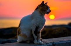 Όμορφο κόκκινο ηλιοβασίλεμα με τη γάτα Στοκ εικόνα με δικαίωμα ελεύθερης χρήσης