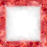όμορφο κόκκινο λουλου&d Στοκ εικόνα με δικαίωμα ελεύθερης χρήσης