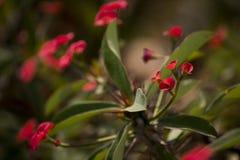 Όμορφο κόκκινο λουλούδι με το υπόβαθρο θαμπάδων στοκ εικόνες