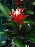 Όμορφο κόκκινο λουλούδι Στοκ φωτογραφία με δικαίωμα ελεύθερης χρήσης