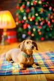 Όμορφο λίγο σκυλί βρίσκεται σε ένα κάλυμμα Στοκ Εικόνα