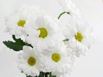 όμορφο λευκό λουλουδ&i Στοκ εικόνα με δικαίωμα ελεύθερης χρήσης