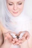 όμορφο λευκό μαντίλι κορ&iot Στοκ φωτογραφία με δικαίωμα ελεύθερης χρήσης