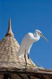 όμορφο λευκό πουλιών Στοκ Εικόνα
