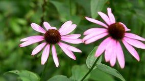 όμορφο λιβάδι λουλουδ&i φιλμ μικρού μήκους