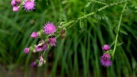 όμορφο λιβάδι λουλουδ&i απόθεμα βίντεο