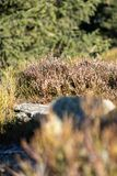 Όμορφο λιβάδι φύσης με τη χλόη βουνών Θερινή ανασκόπηση στοκ φωτογραφία με δικαίωμα ελεύθερης χρήσης