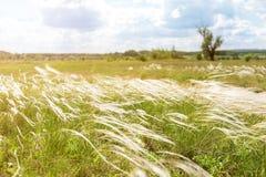 Όμορφο λιβάδι χλόης ή βελόνα-χλόης φτερών stipa Μπλε ουρανός στο υπόβαθρο Θερμό φυσικό τοπίο επαρχίας Στοκ εικόνες με δικαίωμα ελεύθερης χρήσης