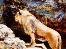 Όμορφο λιοντάρι που στηρίζεται στην ηλιοφάνεια η ανασκόπηση διασταυρώνει τη δύσκολη δομή πετρών βράχου Στοκ εικόνα με δικαίωμα ελεύθερης χρήσης