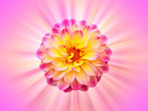 όμορφο λουλούδι ανασκόπησης Στοκ φωτογραφία με δικαίωμα ελεύθερης χρήσης