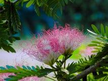 όμορφο λουλούδι λιμένας Σεϋχέλλες νησιών ακτών mahe Στοκ εικόνα με δικαίωμα ελεύθερης χρήσης
