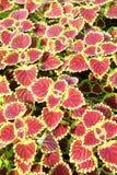 όμορφο λουλούδι πεδίων η Στοκ Εικόνες