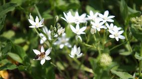 Όμορφο λουλούδι που προσελκύει τα έντομα με τη μυρωδιά του στοκ εικόνες
