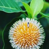 όμορφο λουλούδι στη φύση Στοκ φωτογραφίες με δικαίωμα ελεύθερης χρήσης