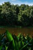 Όμορφο λουλούδι στον ποταμό και τον ουρανό στοκ εικόνες