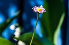 Όμορφο λουλούδι στο μίσχο στοκ εικόνες