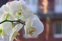 Όμορφο λουλούδι στο σπίτι στοκ φωτογραφία με δικαίωμα ελεύθερης χρήσης