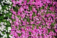 Όμορφο λουλούδι φύσης για το υπόβαθρο στοκ εικόνα