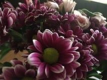 όμορφο λουλούδι στοκ φωτογραφίες