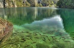 όμορφο μέρος λιμνών ψαριών Στοκ Εικόνες