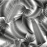 Όμορφο μαύρο άνευ ραφής τροπικό υπόβαθρο σχεδίων ζουγκλών floral με τα φύλλα φοινικών στοκ εικόνες